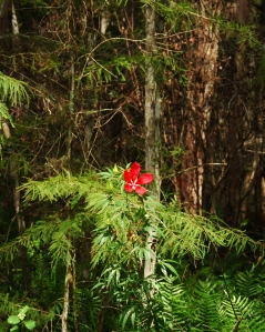 RedBlossomInForest